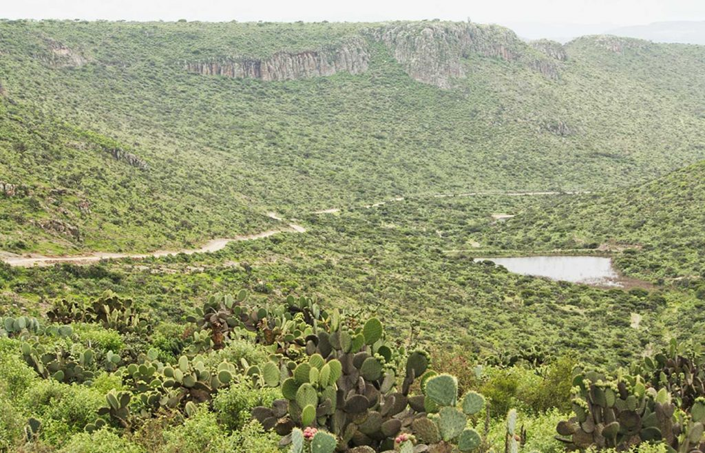 En otros casos han recuperado el ecosistema de su región. (Mesa de Escalante, Guanajuato)